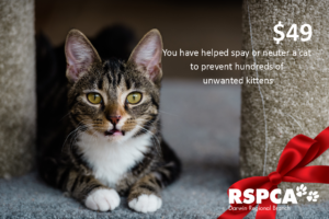 You have helped spay or neuter a cat to prevent hundreds of unwanted kittens
