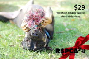 Vaccinate a puppy against deadly infections