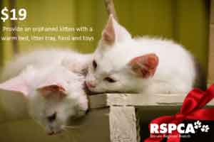 Provide an orphaned kitten with a warm bed, litter tray, food and toys